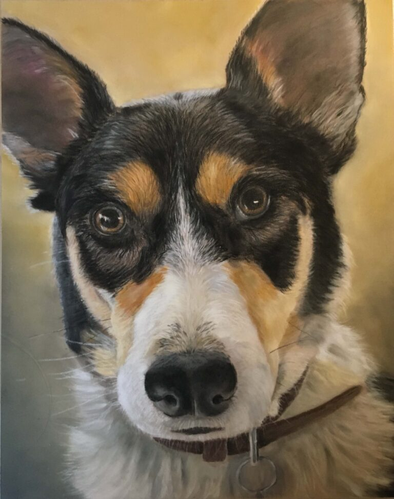 Welsh Sheepdog portrait showing head and shoulder portrait